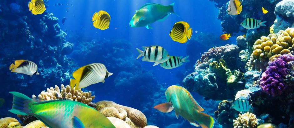 Evangeline & The Underwater Tea Party