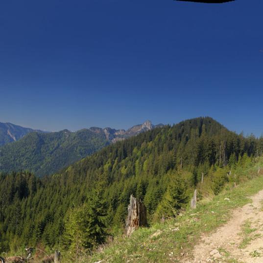 Weg vom Unterberg Richtung Branderalm