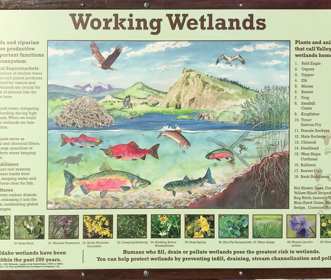 Stanley Wetlands - Panel 1  2018