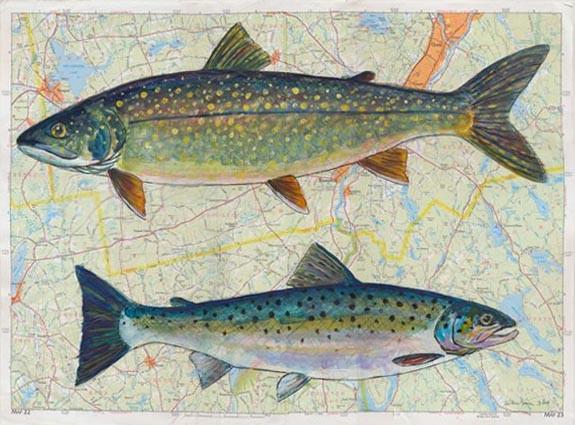 Lucerene Lake Fish