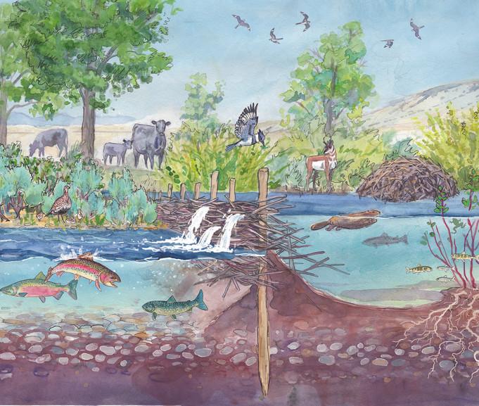 Hawley Creek Kiosk 2019 - illustration BDA creek diagram FLAT.jpg