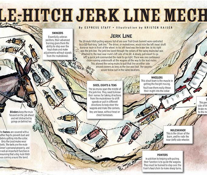 20 Mule-Hitch Jerk Line Mechanics