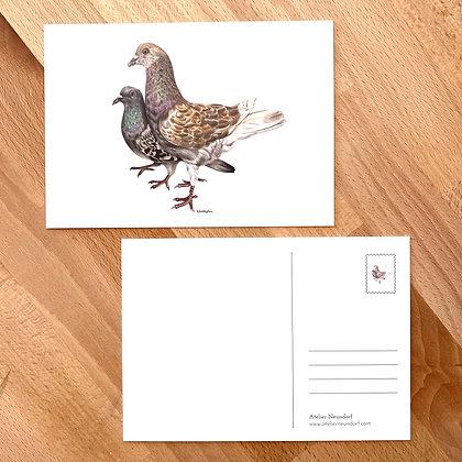 Postkarte Taubenpaar