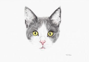Katze grau-weiß