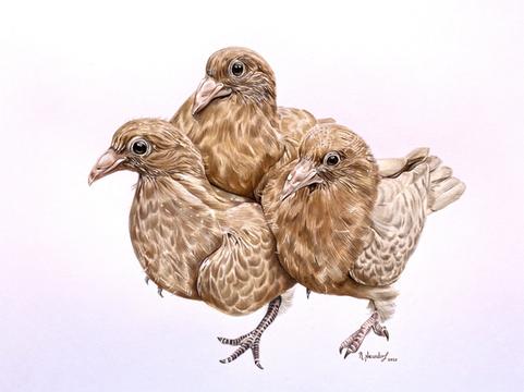 Taubenkinder