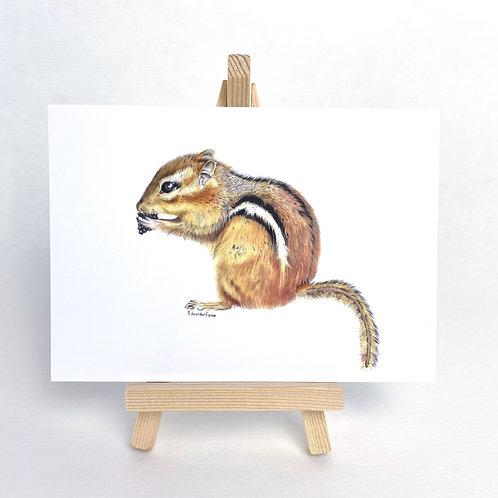 Postkarte Streifenhörnchen