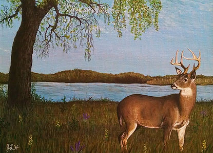 whitetaildeer_02_edited.jpg