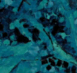 Foret bleue detail.png