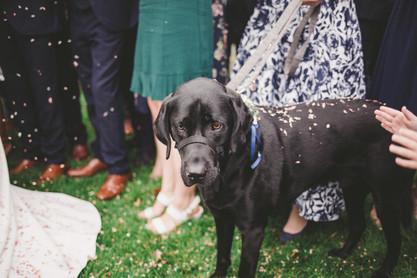 Fun wedding confetti photography Essex