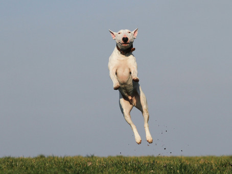 Is your dog a jumper? Stopping this behavior is easier than you may think!