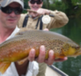 Watauga-River-brown-trout_edited.jpg