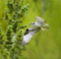 bird green backgrd.jpg