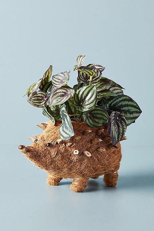 """Плантатор """"Hedgehog"""""""