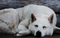 Karai the Russian camp dog