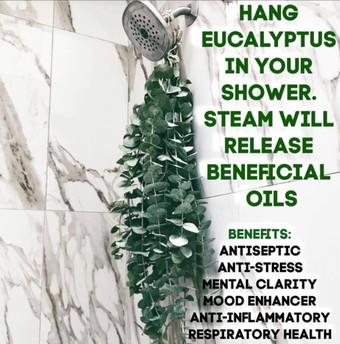 Hang Eucalyptus in your shower!