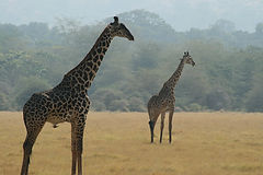uganda, rwanda, tour operaor, safari, conservation, eco-tourism, tailor made