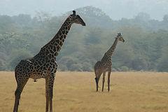 uganda, rwanda, tour operaor, safari, conservation, eco-tourism, tailor made