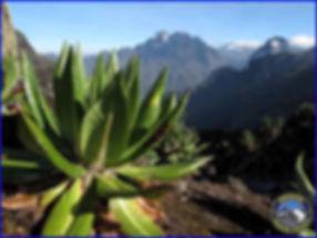 Rwenzori Mountains, mountain climbing africa, uganda mountain climbing, uganda tour