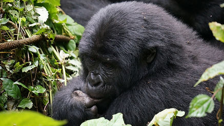 mgahinga gorilla national park, uganda, safari, uganda tour, east african discovery