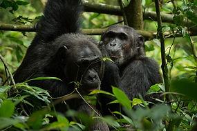 hippo, uganda, tour operator
