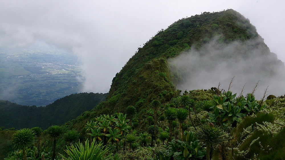 View from the top of Mt Sabyino, one of the Virunga Volcanoes.