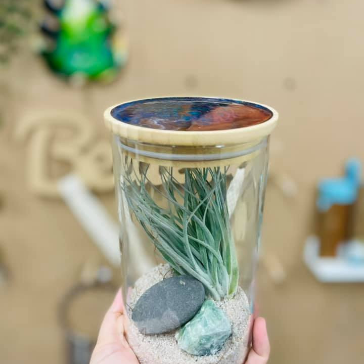 Coffee Club Browns Plains - Learn to make a resin topped air plant and crystal terrarium!