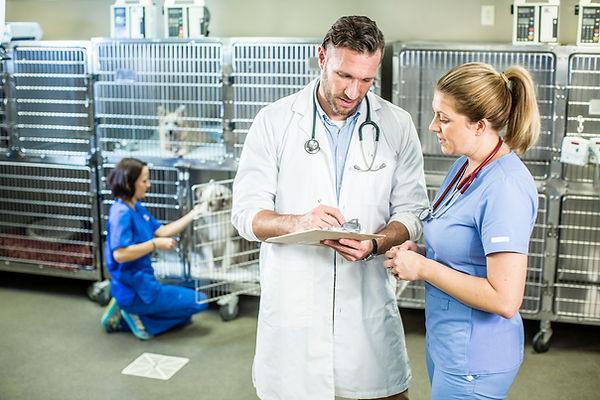 Male veterinarian talking to vet tech