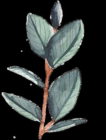 Botanical14.png