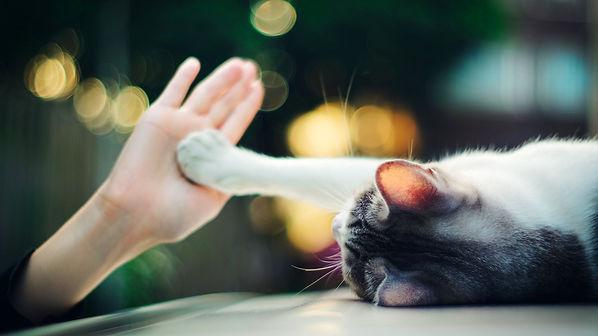 лапа кошки и рука человека.jpg