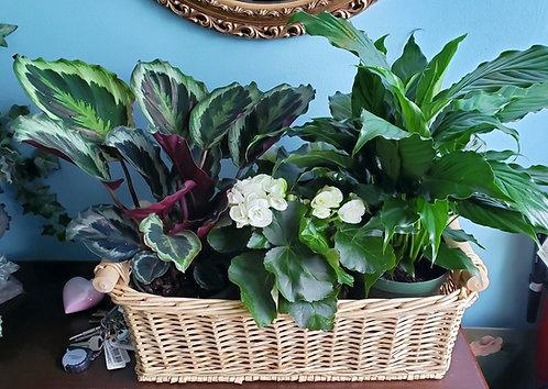 European Garden Basket