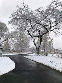 tree with snow.jpg