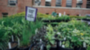 Plant Sale Picture.jpg