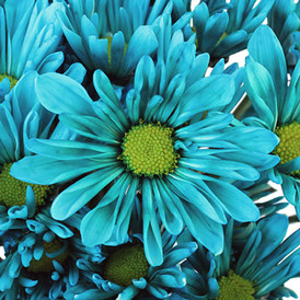 turquoise flower.jpg