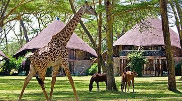 sejour au kenya