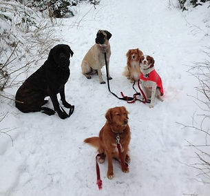 Obedience Training Halifax Nova Scotia