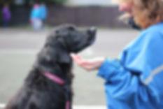Dog Training Halifax Nova Scotia