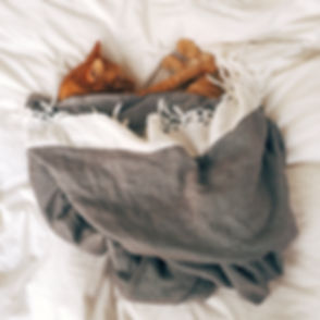 animal-bed-cat-103651.jpg