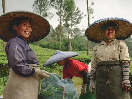 A Spotlight on Gender Mainstreaming in Agricultural Value Chains in Southeast Asia