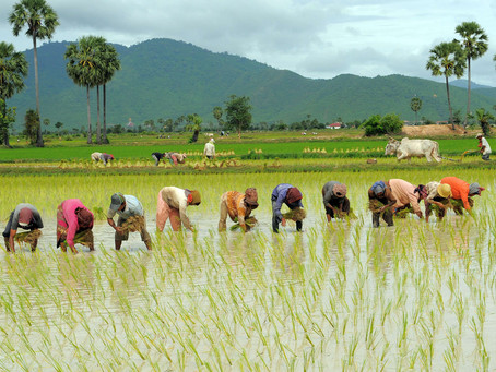 Cambodia Partnership for Sustainable Agriculture: Consultation meeting