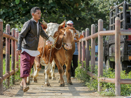 Opportunities for European Agritech in Southeast Asia's Livestock Industry