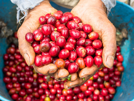 Leveraging Multi-stakeholder Partnerships for Sustainable Coffee Development