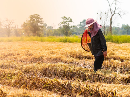 Sustainability Reporting in the Agriculture, Aquaculture, and Fishing Sector and the ASEAN RAI