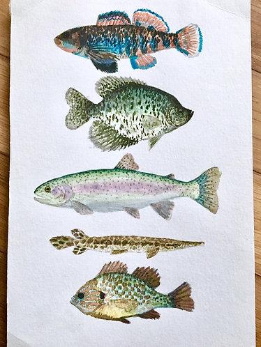 Fish of Kentucky