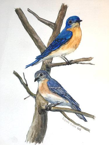 Bluebird print
