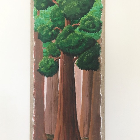 Sequoia tree.