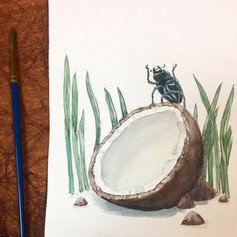 Beetle on a coconut