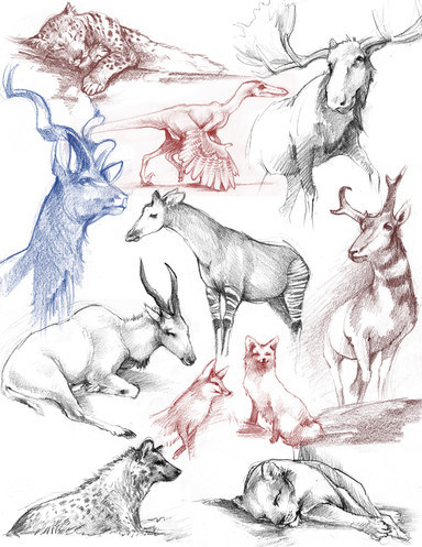 Life drawings of various animals