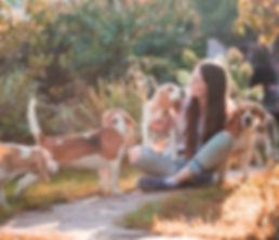 бигль, щенки бигля, собака, собаки, бигли, купить бигля