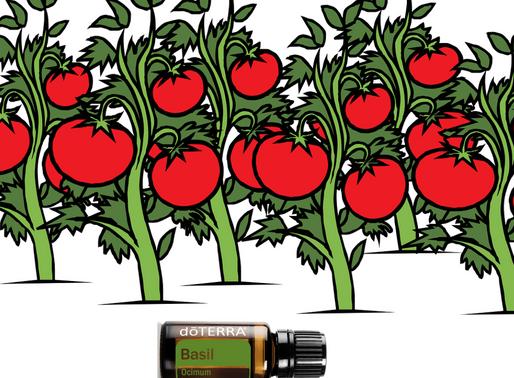 La santé de vos tomates de potager