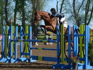Blue Water Farms Rescue CA Equestrian Training